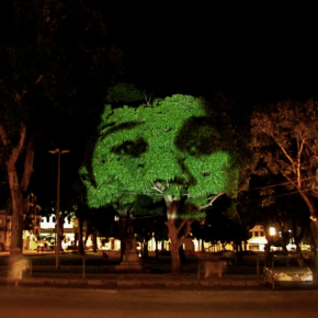 Por que projetar rostos em árvores em Belém?